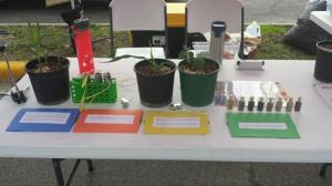 Market science_seeds_1