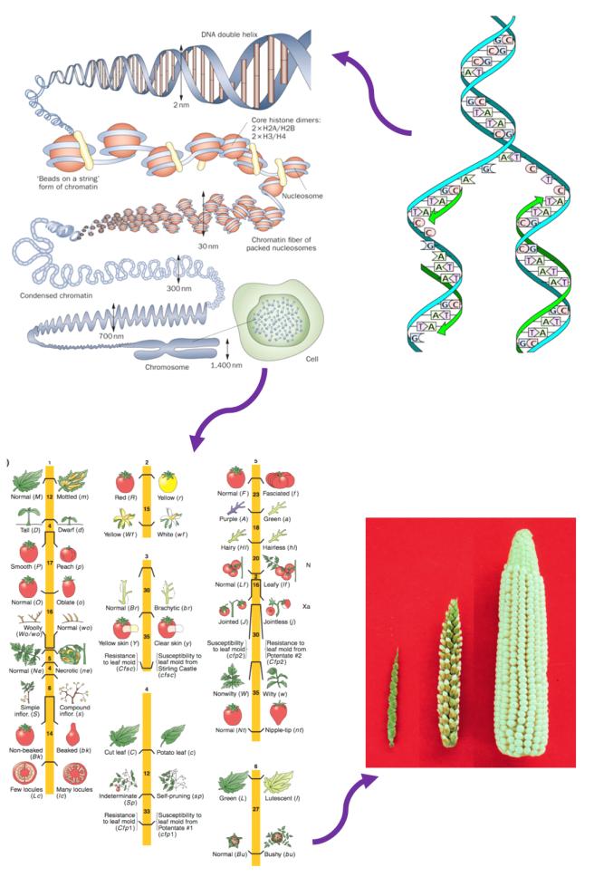 Genes_4