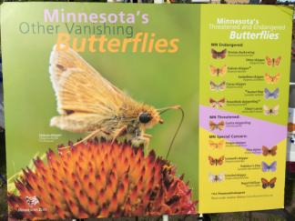 butterflies_8